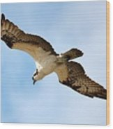 Hunter Osprey Wood Print