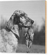 Hunting Dog With Quail, C.1920s Wood Print