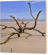 Hunting Island Beach Beaufort Sc Wood Print