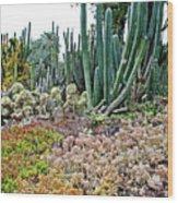 Huntington Desert Garden In San Marino-california Wood Print