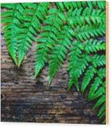 Huntley Meadows Park #2 Wood Print