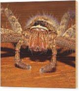 Huntsman Spider Wood Print by Joerg Lingnau