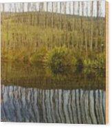 Huon Poplars Wood Print
