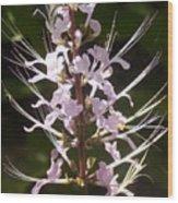 Hurricane Lilies Wood Print
