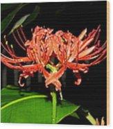 Hurricane Lily Wood Print