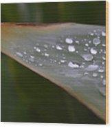 Hurricane Raindrops Wood Print