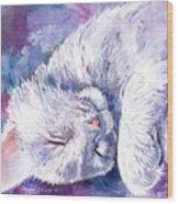Hushabye Kitten Wood Print
