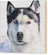 Husky Blue Wood Print