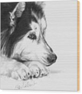 Husky Contemplation Wood Print by Sheona Hamilton-Grant