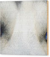 Husky Eyes Wood Print