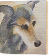 Husky Mix Wood Print