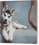 Husky Puppy II Wood Print