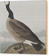 Hutchins's Barnacle Goose Wood Print