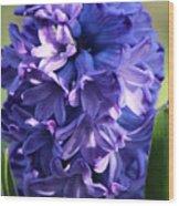 Hyacinth Highlights Wood Print