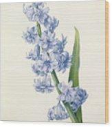 Hyacinth Wood Print by Pierre Joseph Redoute