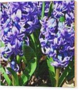 Hyacinths Wood Print