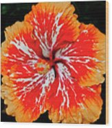 Hybrid Hibiscus II Maui Hawaii Wood Print