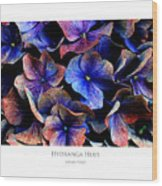 Hydranga Hues Wood Print