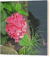Hydrangea And Koi Wood Print