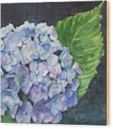 Hydrangea And Water Droplet Wood Print