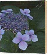 Hydrangea Blue In The Garden Xii Wood Print