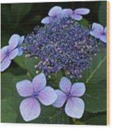 Hydrangea Blue Xi Wood Print
