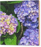 Hydrangea Blues Wood Print