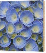 Hydrangea Closeup Wood Print