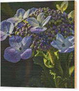 Hydrangea Color Wood Print