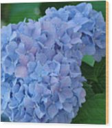 Hydrangea Floral Flowers Art Prints Baslee Troutman Wood Print