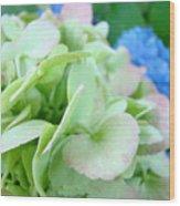 Hydrangea Flowers Art Prints Floral Gardens Gliclee Baslee Troutman Wood Print