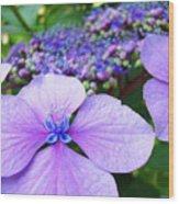Hydrangea Flowers Art Prints Hydrangea Garden Giclee Art Prints Baslee Troutman Wood Print