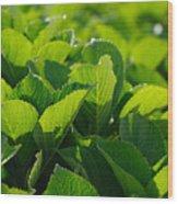 Hydrangea Foliage Wood Print by Gaspar Avila