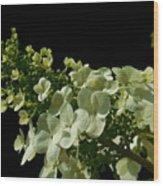 Hydrangea Formal Study Landscape Wood Print