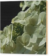 Hydrangea Formal Study Portrait Wood Print