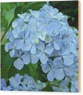 Hydrangea Garden Art Prints Hydrangeas Flower Garden Baslee Troutman Wood Print