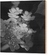 Hydrangea In Black And White Wood Print