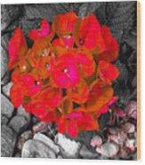 Hydrangea In Carmine Wood Print