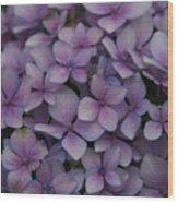 Hydrangea In Lavender 1 Wood Print