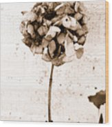 Hydrangea Interest Wood Print