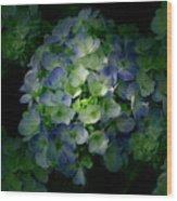 Hydrangea - Flowers Wood Print