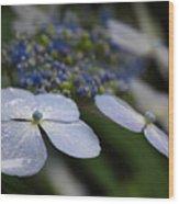 Hydrangea Macrophylla Wood Print