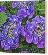 Hydrangea, Macrophylla Teller Wood Print