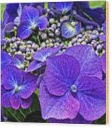 Hydrangea Plant Wood Print