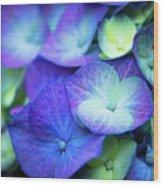 Hydrangea - Purple And Green Wood Print