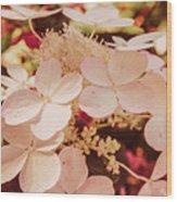 Hydrangeas 7 Wood Print