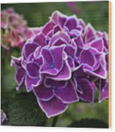 Hydrangeas In The Summer Wood Print