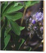 Hydrophyllum Capitatum Wood Print