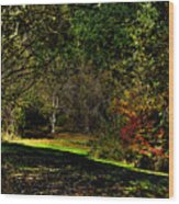 Hylebos In Autumn Wood Print