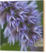 Hyssop Blue Wood Print
